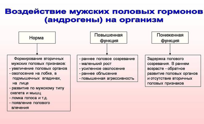Воздействие мужских половых гормонов (андрогены) на организм
